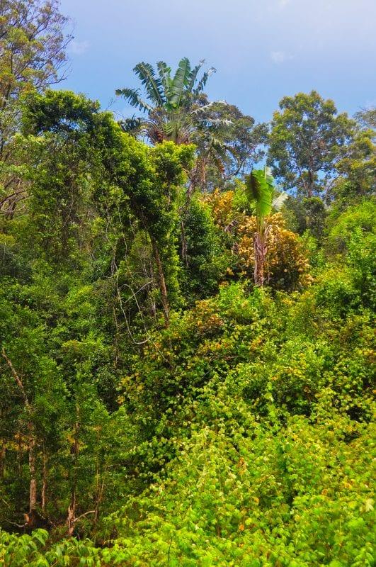 Selvas de Mitsinjo