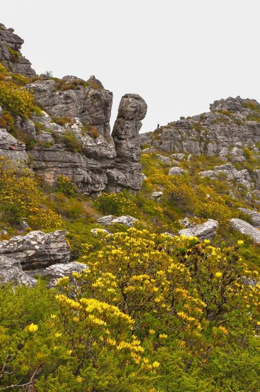 Paisaje en Table Mountain