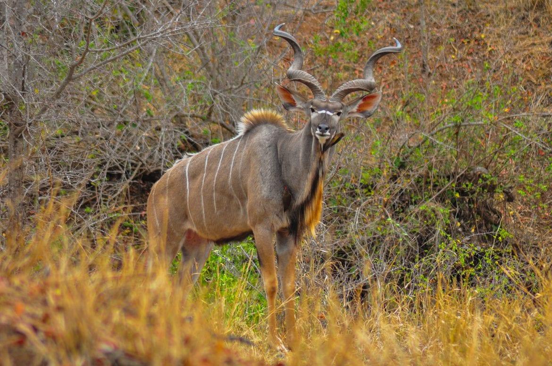 Kruger Park Norte