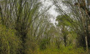 Nagarhole Park