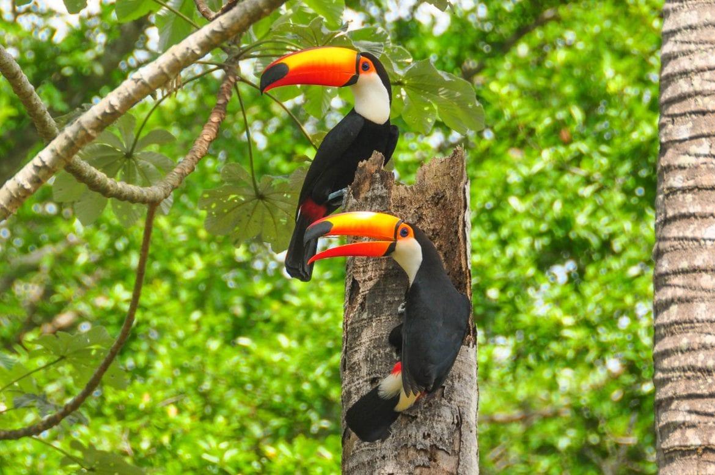 Pantanal II